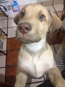 Él es Corcho, ya casi cumple tres meses
